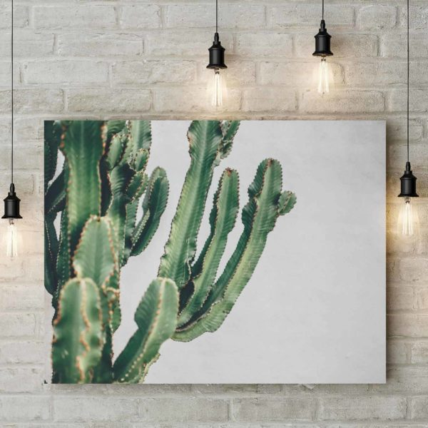Old Town Cactus 1