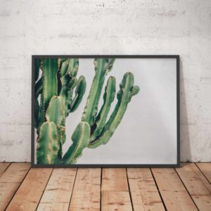 Old Town Cactus 2