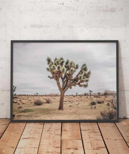 Joshua Tree Wide 2