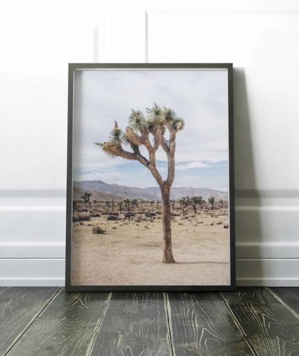 Mother Joshua Tree 9